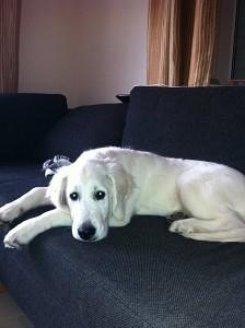 Percy auf der Couch