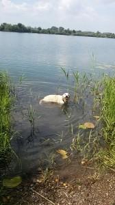 Fudge beim Schwimmen