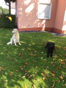 Percy und Mylo