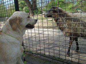 Fussel im Zoo